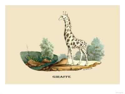 https://imgc.artprintimages.com/img/print/giraffe_u-l-p2c70s0.jpg?p=0