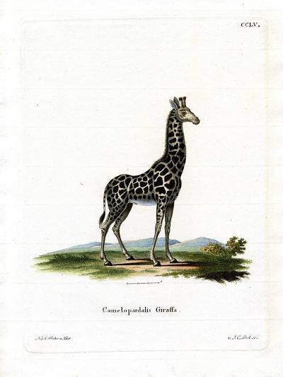 Giraffe--Giclee Print