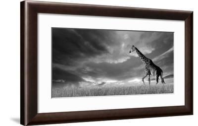 Giraffes, African Skies--Framed Art Print
