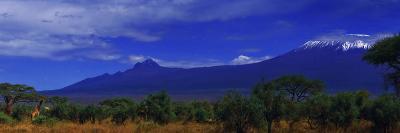 Giraffes and Acacia Trees with a Moonlit Backdrop of Mount Kilimanjaro, Kibo and Mawenzi Peaks-Babak Tafreshi-Photographic Print