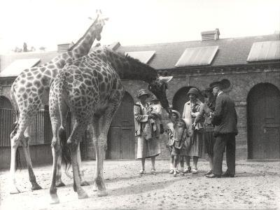 Giraffes and Visitors at Zsl London Zoo, from July 1926-Frederick William Bond-Photographic Print
