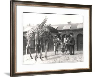 Giraffes and Visitors at Zsl London Zoo, from July 1926-Frederick William Bond-Framed Photographic Print
