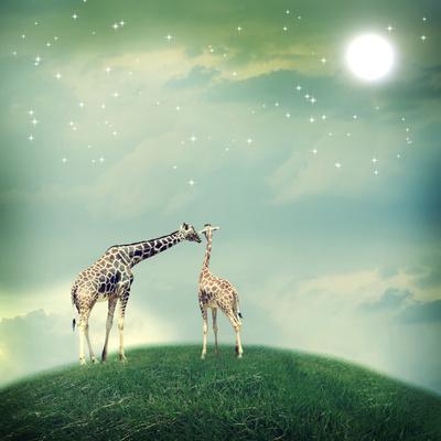 Giraffes In Friendship Or Love Concept Image-Melpomene-Photographic Print