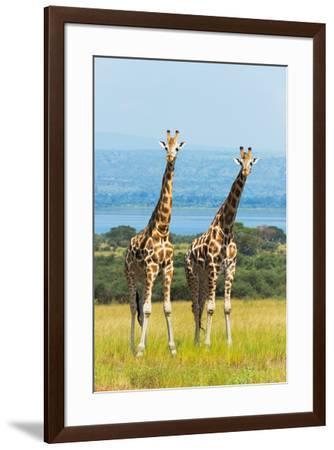 Giraffes on the savanna, Murchison Falls National park, Uganda-Keren Su-Framed Premium Photographic Print