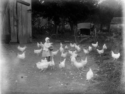 Girl Feeding Chickens--Photographic Print