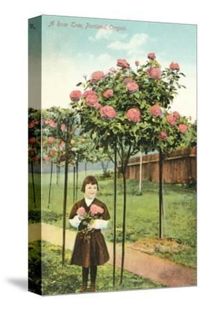 Girl Standing by Rose Trees, Portland, Oregon