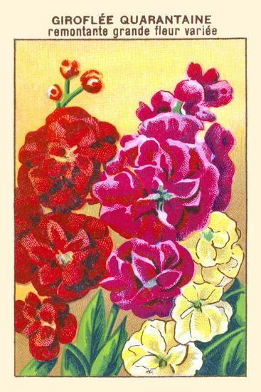 Giroflee Quarantaine Remontante Grande Fleur Variee--Art Print