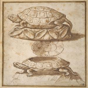Design for a Lidded Box in the Shape of a Tortoise, Shown Open and Shut by Giulio Romano