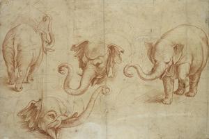 Four Studies of an Elephant by Giulio Romano