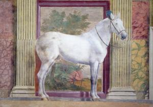 Sala Dei Cavalli, Detail Showing Portrait of a Grey Horse from the Stables of Ludovico Gonzaga III by Giulio Romano
