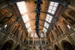 Natural History Museum II by Giuseppe Torre