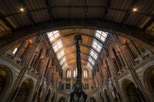 Natural History Museum III by Giuseppe Torre