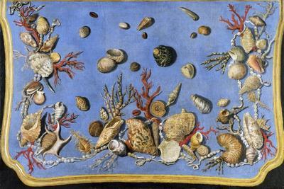 Preparatory Painting for Floor Console Decorated with Shells and Corals, 1760