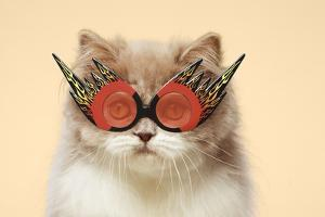 Persian Cat Wearing Flaming Eye Glasses by GK Hart/Vikki Hart