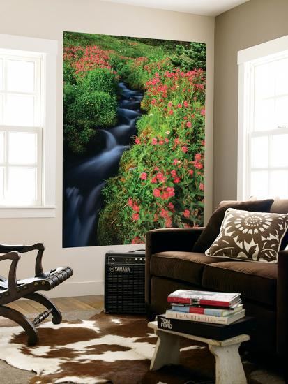 Glacier-Fed Stream, Pink Monkey-Flowers, Mt Rainier National Park, Washington, USA-Stuart Westmorland-Giant Art Print