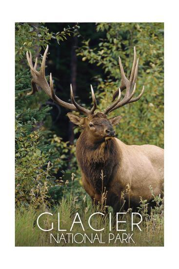 Glacier National Park - Elk Bull-Lantern Press-Art Print
