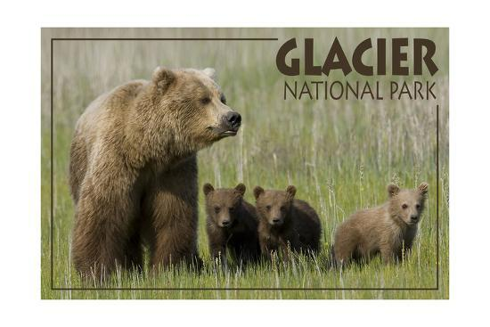 Glacier National Park - Grizzly Bear and Cubs-Lantern Press-Art Print