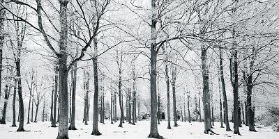 Glade In Winter-Joseph Eta-Giclee Print