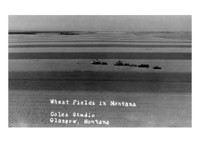 Glasgow, Montana - Wheat Fields-Lantern Press-Art Print