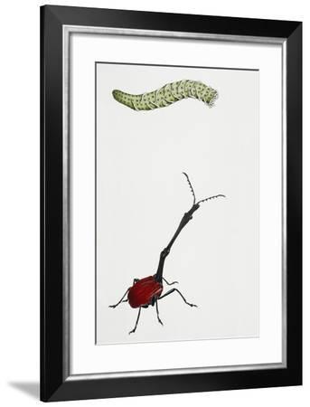 Glass Sponge or Venus's Flower Basket (Euplectella Aspergillum)--Framed Giclee Print