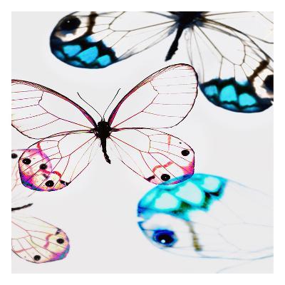 Glasswings-Tracey Telik-Art Print