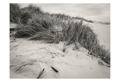 Beachy Dunes