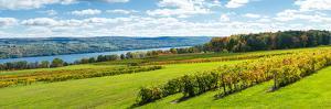 Glenora Vineyard, Seneca Lake, Finger Lakes, New York State, Usa