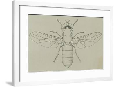 Glittering Green Fly (Poecilobothrus Nobilitatus), Diptera--Framed Giclee Print