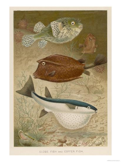 Globe Fish and Coffer Fish Swimming Together--Giclee Print