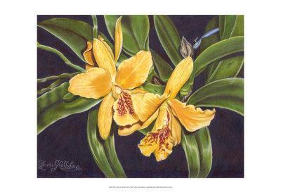 Vibrant Orchid I