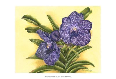 Vibrant Orchid III