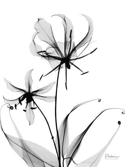 Gloriosa Lily-Albert Koetsier-Art Print