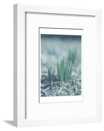 Glory Dew-Sheldon Lewis-Framed Photographic Print