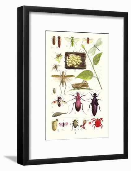 Glow-Worm, Lacewing Fly, Grasshopper,Scarlet Spider-James Sowerby-Framed Art Print