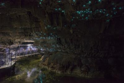 Glow Worms in Waitomo Caves, Waikato Region, North Island, New Zealand, Pacific-Matthew Williams-Ellis-Photographic Print