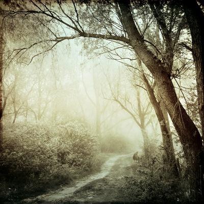 https://imgc.artprintimages.com/img/print/glowing-mist_u-l-pyzshp0.jpg?p=0