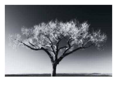 Glowing Tree-Jamie Cook-Premium Photographic Print