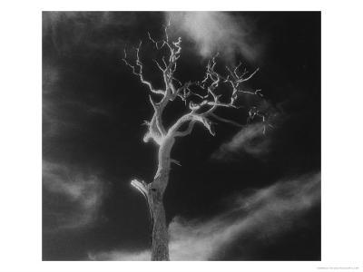 Gnarled Tree, County Offaly, Ireland-Simon Marsden-Giclee Print