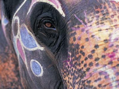 Goa, India, Close-up of Elephants Eye-Peter Adams-Photographic Print