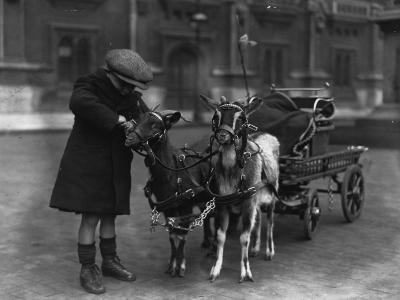 Goat Cart--Photographic Print