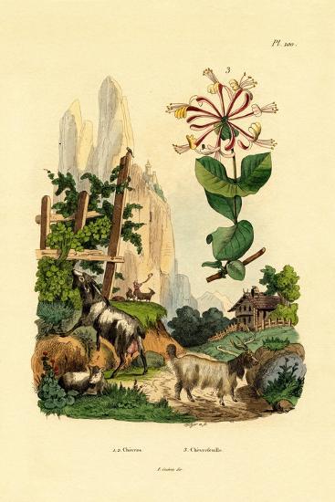 Goats, 1833-39--Giclee Print