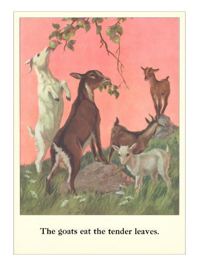 Goats Eat Tender Leaves--Art Print