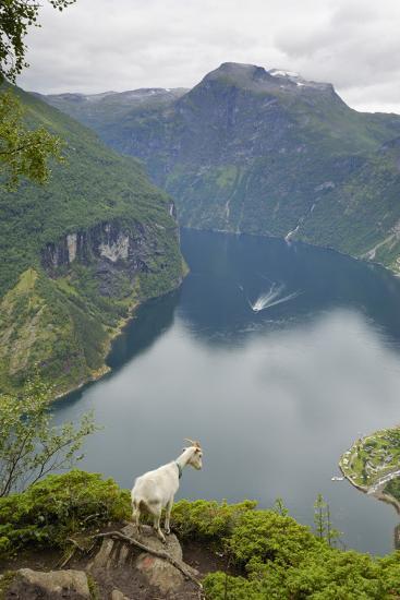 Goats Overlooking Geirangerfjorden, Near Geiranger, UNESCO Site, More Og Romsdal, Norway-Gary Cook-Photographic Print
