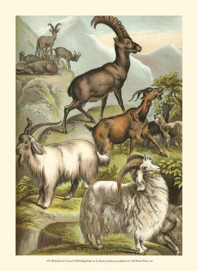 Goats-Henry J. Johnson-Art Print