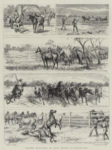 Yarding Warrigals or Wild Horses in Queensland by Godefroy Durand