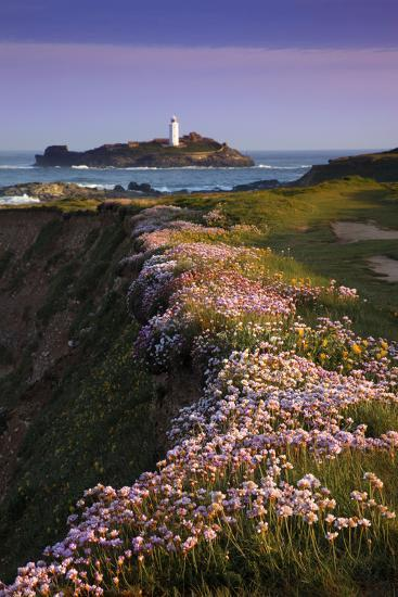Godrevy Thrift in Flower--Photographic Print