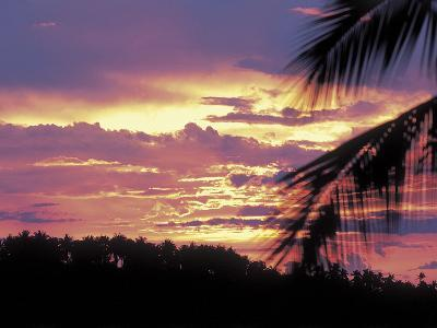 Gold and Pink Sunset with Silhouette of Palm Tree--Photographic Print