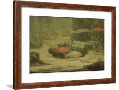 Gold and Silver Fish Swimming in an Aquarium-Gerrit Willem Dijsselhof-Framed Art Print