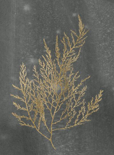 Gold Foil Algae II on Black-Jennifer Goldberger-Art Print