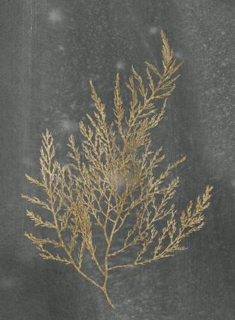 https://imgc.artprintimages.com/img/print/gold-foil-algae-ii-on-black_u-l-f9fzhj0.jpg?p=0